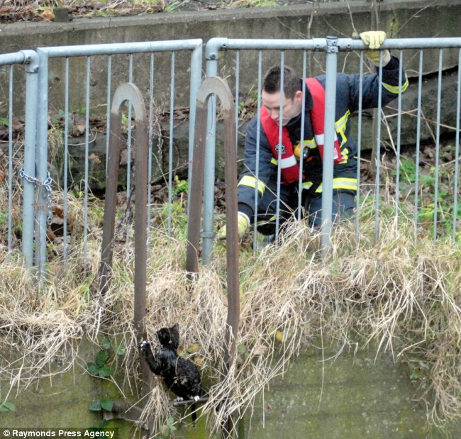 gato negro mojado salvamento bomberos