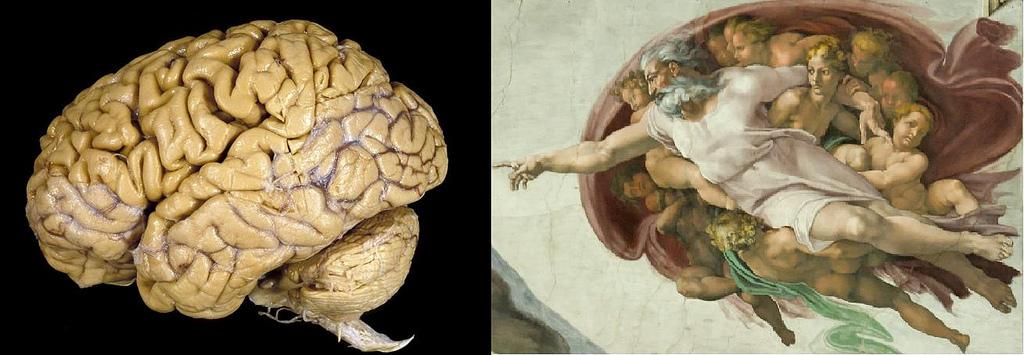 miguel angel dios hombre cerebro