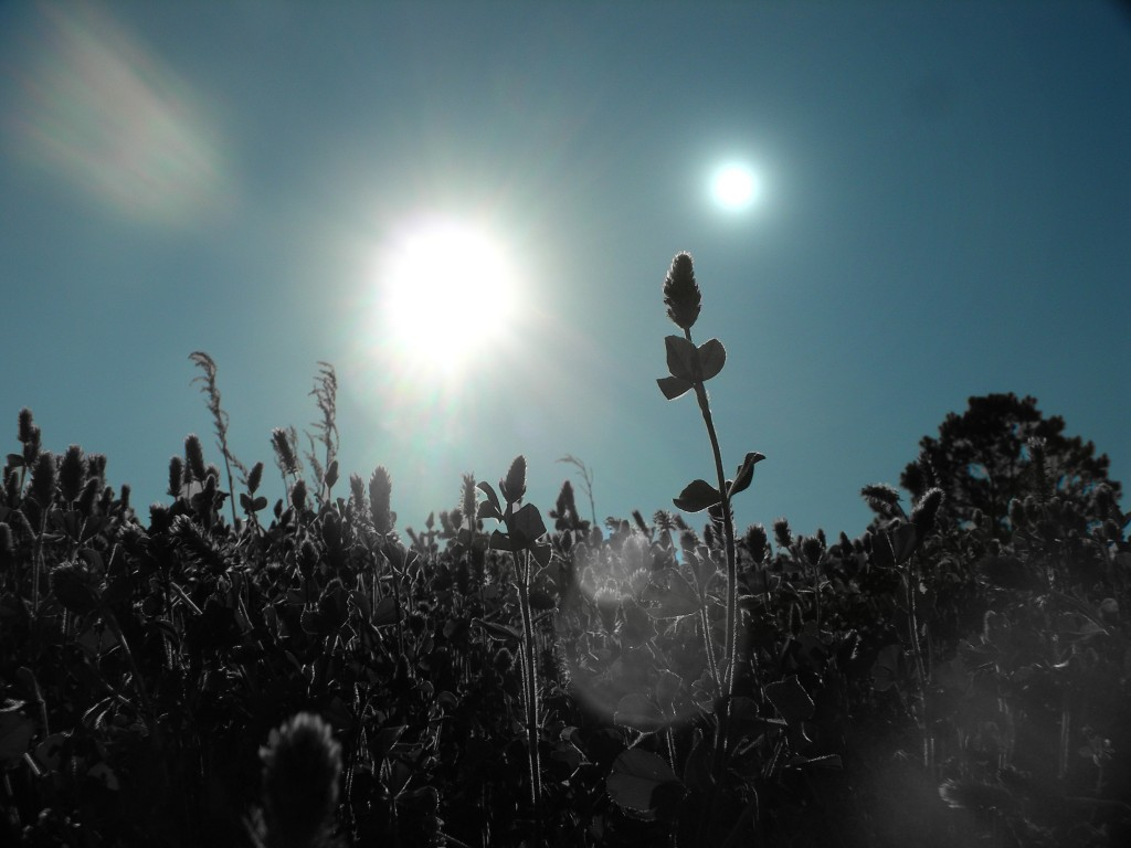plantas vegetacion negra mundo dos soles estrellas