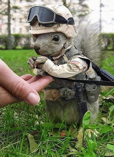 animales humor ardilla militar