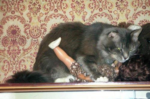 animales humor gato acosando muneca
