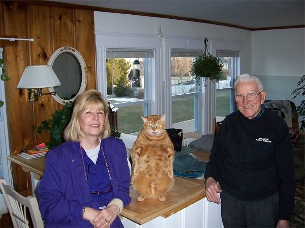 animales humor gato descarado