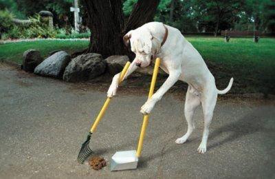 animales humor perro recogiendo excremento