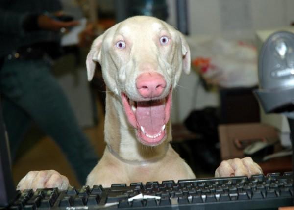 animales humor perro teclado