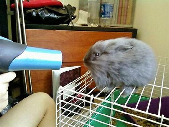 animales humor secador conejo
