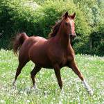 caballo animal horse
