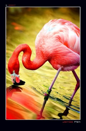 flamingo-ave-postal