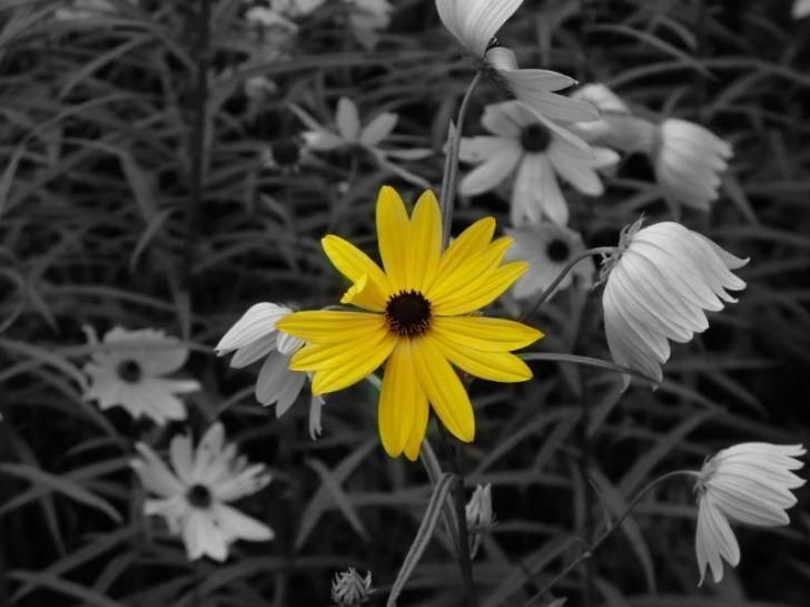 fotos arte flor margarita