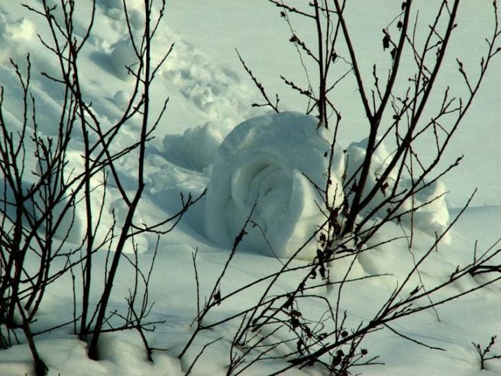 fotos-arte-rosa-nieve