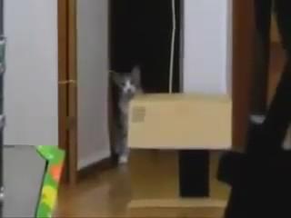 gato pelicula terror video