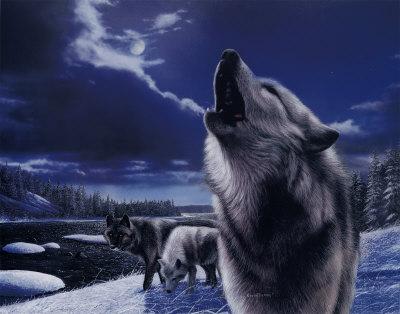 lobos-aullando-poster