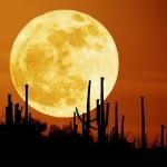 ¿Qué es la Luna de la cosecha?