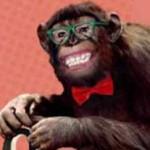 Di NO al maltrato de un chimpancé en el programa televisivo Involución