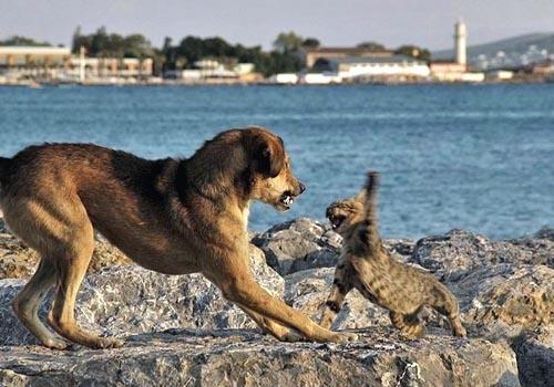 perros-gatos-cat-dogs-09