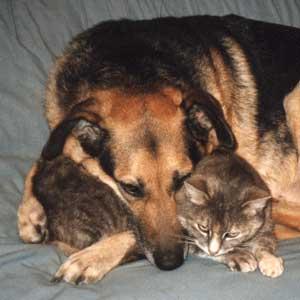 perros-gatos-cat-dogs-10