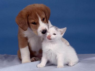 perros-gatos-cat-dogs-15
