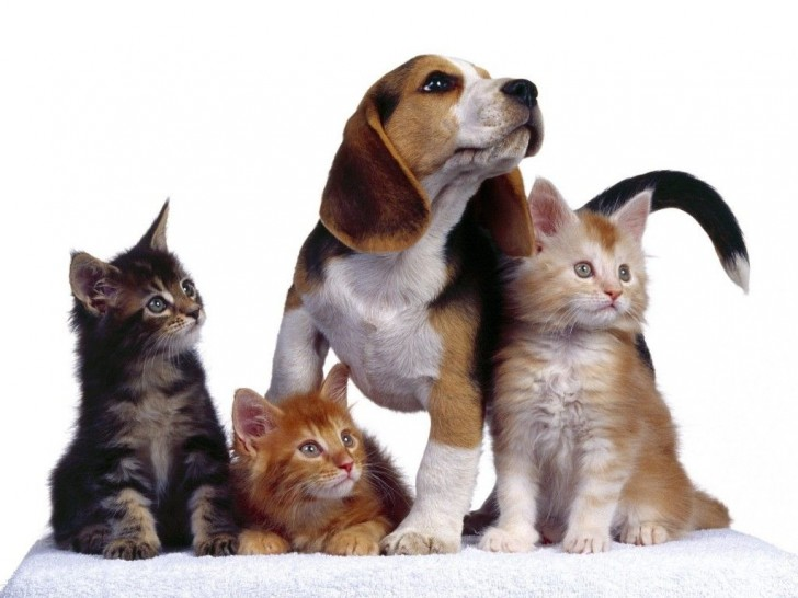 perros-gatos-cat-dogs-16