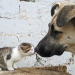 perros-gatos-cat-dogs-17