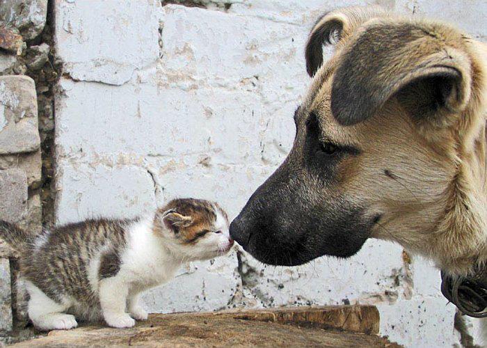 perros-gatos-cat-dogs-17