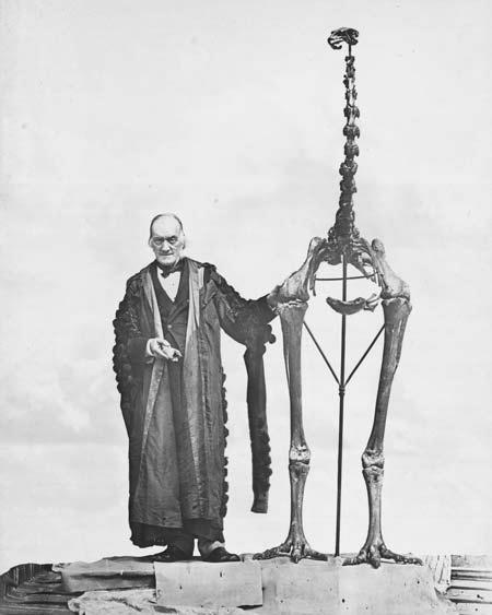 richard owen dinornis robustus moa esqueleto