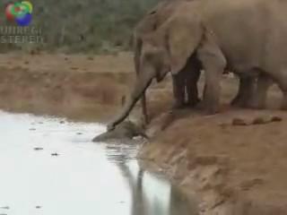 salvamento rescate elefante cria ahogado agua