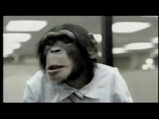 violencia animales monos orangutanes