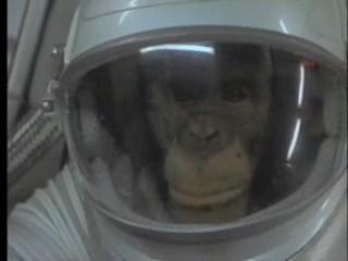 denuncia peta animales chimpances monos
