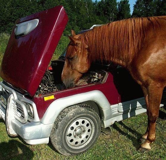 animales-graciosos-caballo-mecanico