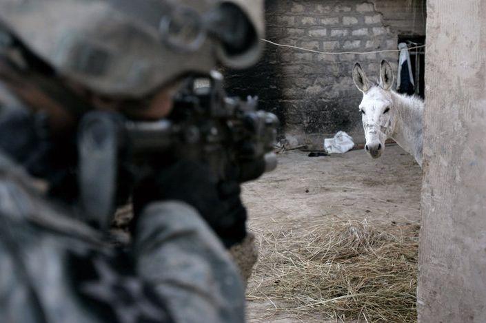 animales-graciosos-caballo