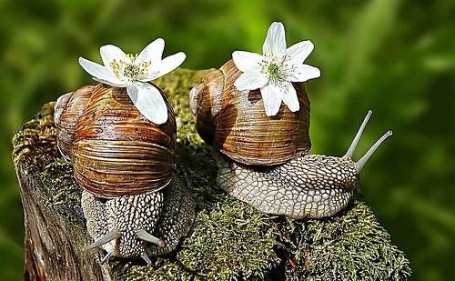 animales-graciosos-caracoles-pareja