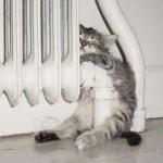 animales-graciosos-gato-estufa