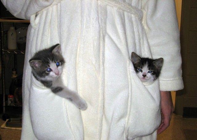 animales-graciosos-gatos-albornoz
