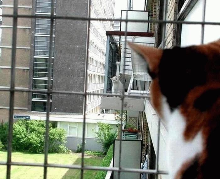 animales-graciosos-gatos-lejanos