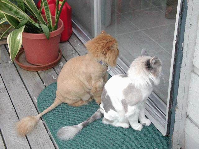 animales-graciosos-gatos-pelados