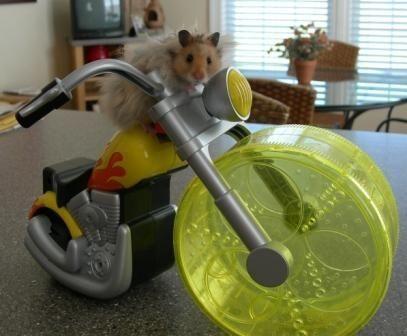 animales-graciosos-hamster-ciclista