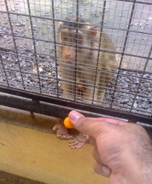 animales-graciosos-mono