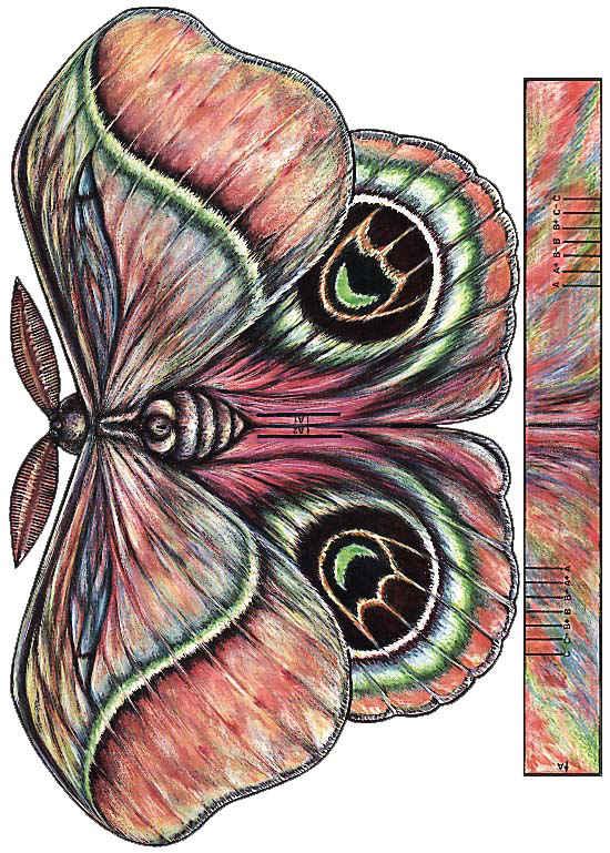 kokigami polilla moth cut