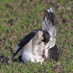 Naturaleza salvaje, bella e indómita: Pájaro atacando