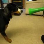 perro broma vuvuzela trompetilla
