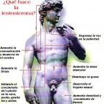 testosterona hormona cuerpo humano
