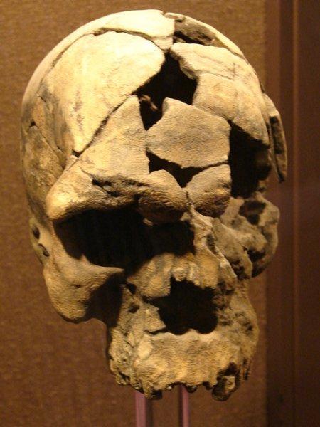 Homo Sapiens El hombre de Herto 160000 anos National Museum Addis Ababa