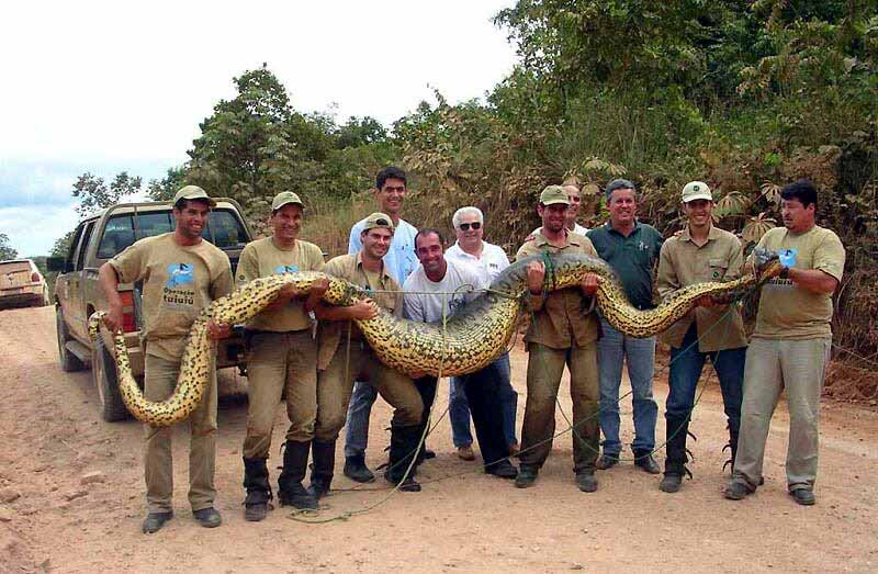 anaconda gigante grande enorme