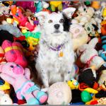 Chaser, la perra que comprende 1.022 palabras