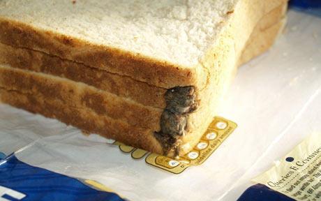 hovis encontrado raton pan molde