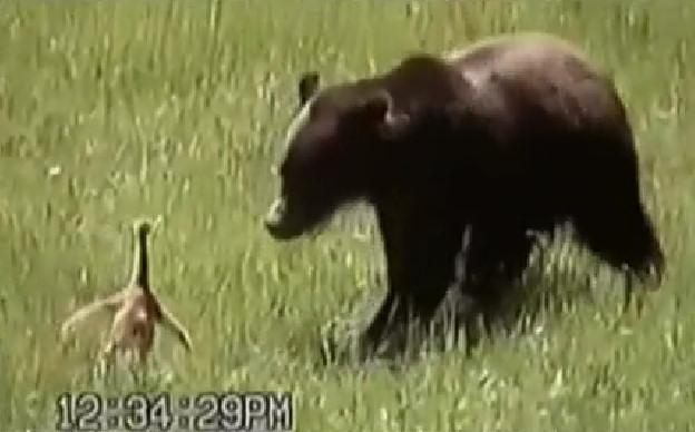 imagenes humor ave oso