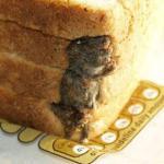 Un ratón en el pan de molde