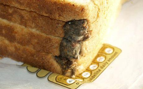 tesco premier foods raton pan molde