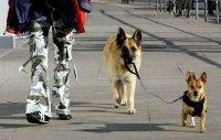 Yo tampoco he visto nunca a un chino paseando a un perro