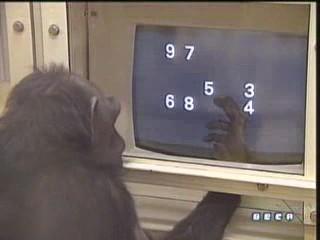 documental ai bebe chimpances inteligencia 01