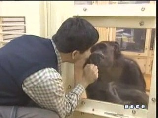 documental ai bebe chimpances inteligencia 03